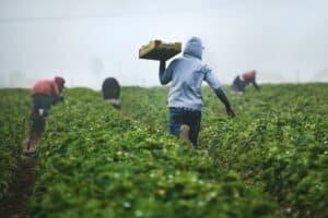Saisonjob Ferienjob Auslandsjob Farmarbeit Landwirtschaft Erntehelfer
